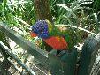 The Lorikeets at Bristol zoo!!!
